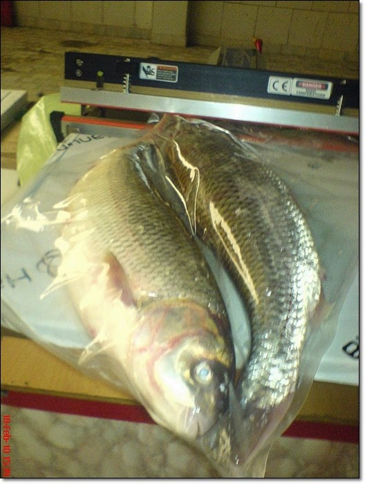 Mesin Vakum Pengemas Untuk Mengemas Ikan